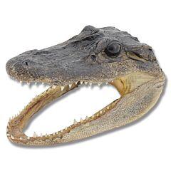 American Alligator Head - Small