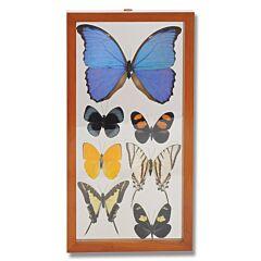 Seven Butterflies Natural History Display