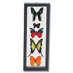 Five Butterflies Display
