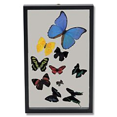 Ten Butterflies Display