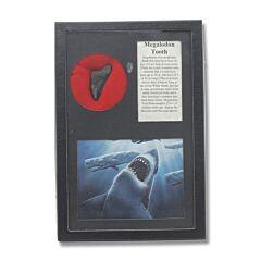 Megalodon Giant Shark Tooth