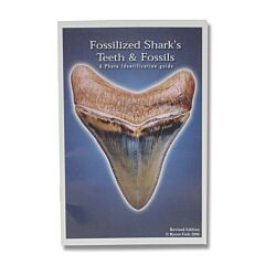 Fossilized Shark's Teeth & Fossils Photo Identification Guide