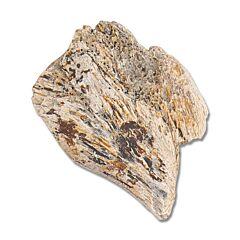Edmontosaurus Dinosaur Bone